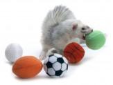 Marshall Sport Balls 2pk